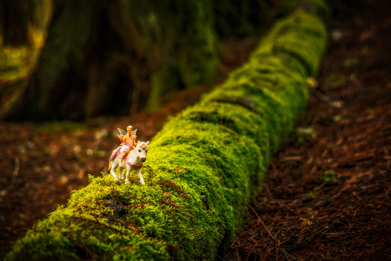 Fairy on a mossy log